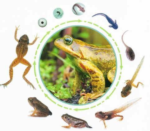 Bildergebnis für thema frosch kindergarten