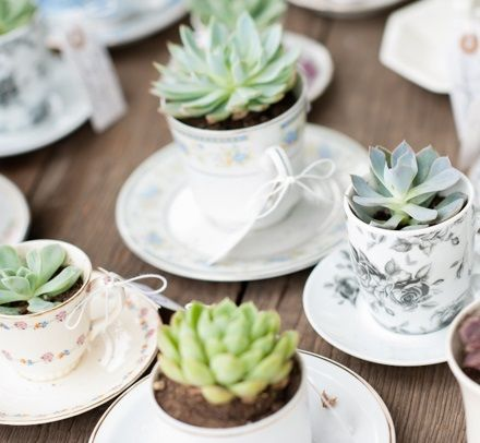 Bomboniere di matrimonio con piante grasse Pagina 3 - Fotogallery Donnaclick