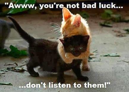 Happy National Black Cat Day ~ BioBunch