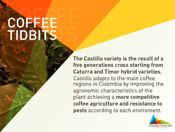 Wanting more? Go to www.colombiancoffeehub.com