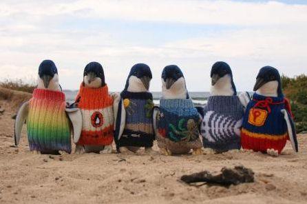 Amazing penguin jumpers!