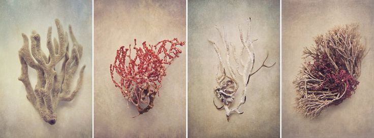 """Gifts of the Sea"" print set - 4x 50x75cm prints by Natascha van Niekerk Fine Art Photography"