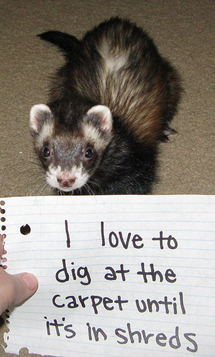 31 Exotic Pets Who Should Have An Arrest Record - ICM Blog