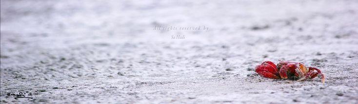 macro photo art by sa hadi by Sa Hadi © All rights reserved by Sa Hadi Thanks in advance #garde #summer #2016 #color #liverwort #common #falguera #delicate #wallpaper #extreme close-up #plant #growth #outdoors #beauty in nature #close-up #selective focus #colorful #youpic #blur #light #life #discoverbanglades #bangladeshisbeautiful #milliondollervisuals #sa_hadi_photography #macro #worldprime #globe_visuals #canon #beauty #beautiful #kuakata #sea beach. #photo #architecture #abstract #ocean