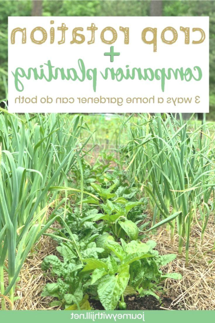 Crop Rotation For Homemade Vegetable Gardeners The Beginner S Garden Beginner Garden Gardeners Home Succession Planting Crop Rotation Companion Gardening Backyard garden crop rotation