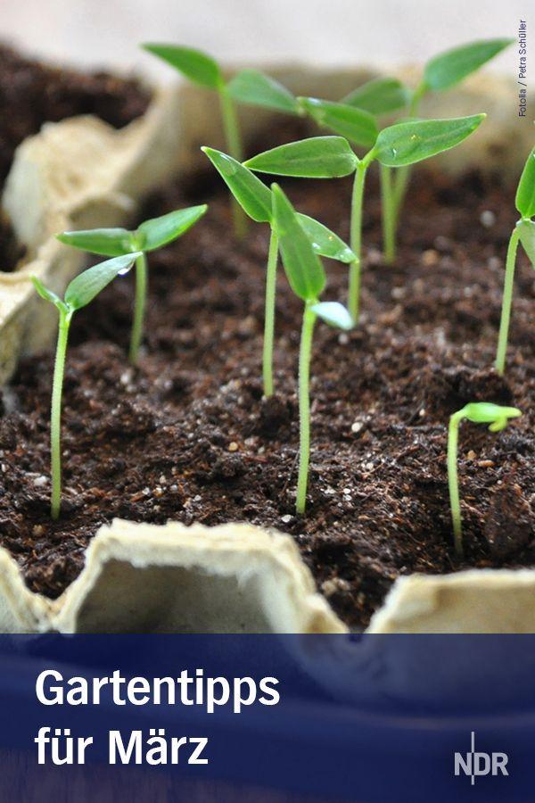 Garten: Tipps für März