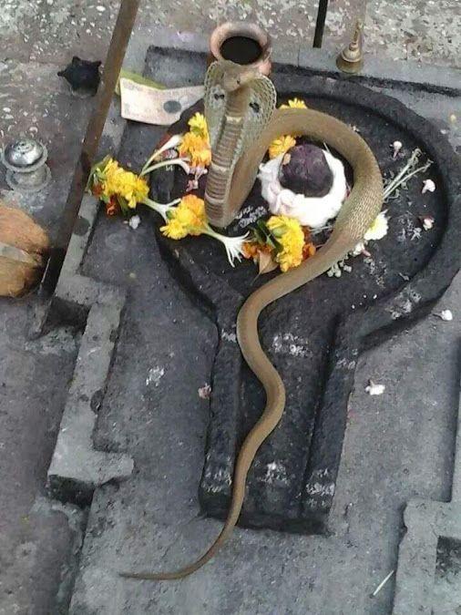 snakes and mysticism :::  http://isha.sadhguru.org/blog/yoga-meditation/demystifying-yoga/snakes-and-mysticism/