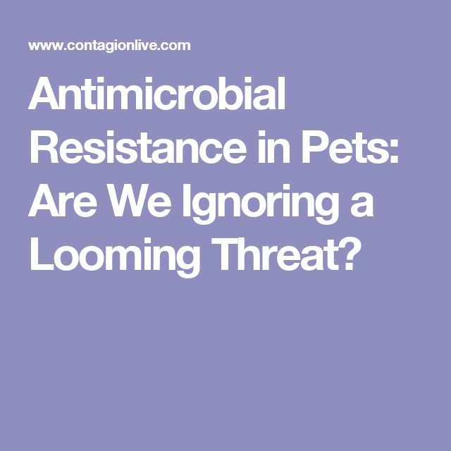 Antimicrobial Resistance in Pets: Are We Ignoring a Looming Threat?
