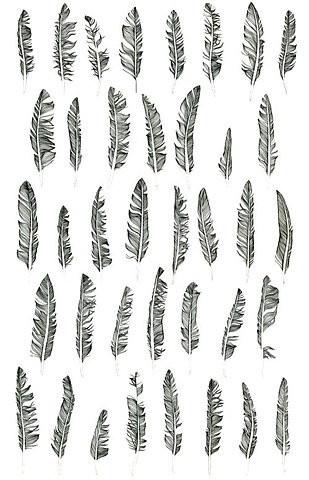 feather tattoo design ideas