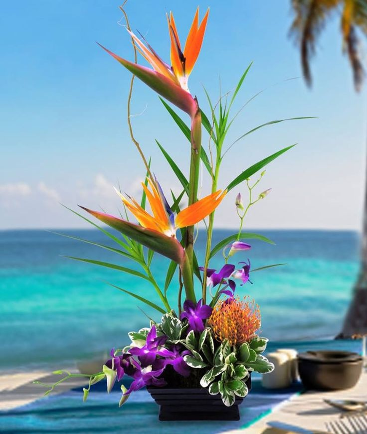 an overview of the exotic flower the bird of paradise flower Birds in paradise give someone this exotic arrangement of birds of paradise with vibrant purple dendrobium orchids and lush greenery a statement arrangement for home or office.