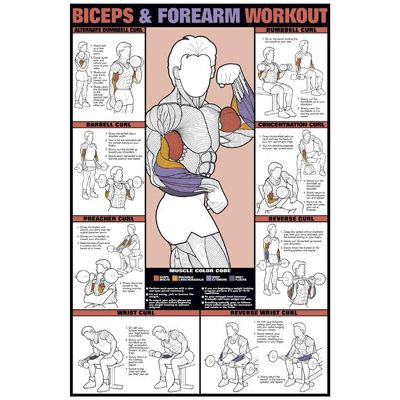 Bicep Workout.