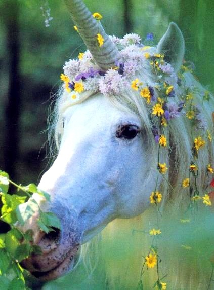 Unicorn Wedding horse Flower Crown Toni Kami ❀Flowers in their coats❀