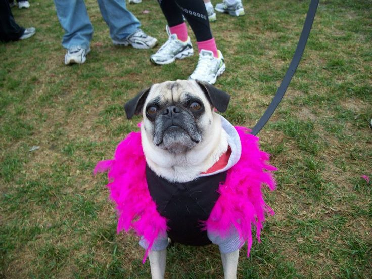 Since 2008, Team Body Buster has proudly participated in the Canadian Breast Cancer Foundation CIBC Run for the Cure. Our team is comprised of Body Buster Fitness Instructors, Members and Family/Friends of all ages! In past year's we've even had some four-legged friends on our team on run/walk day!