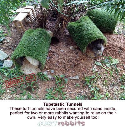 Rabbit Shelter - Protection, Refuge & Safety