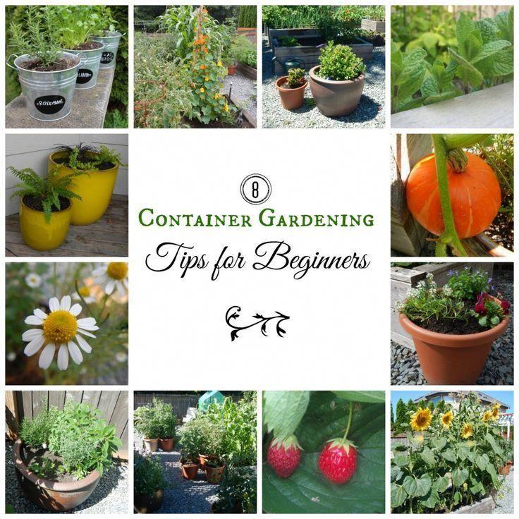 8 Container Gardening Tips for Beginners #gardeningtipsforbeginners