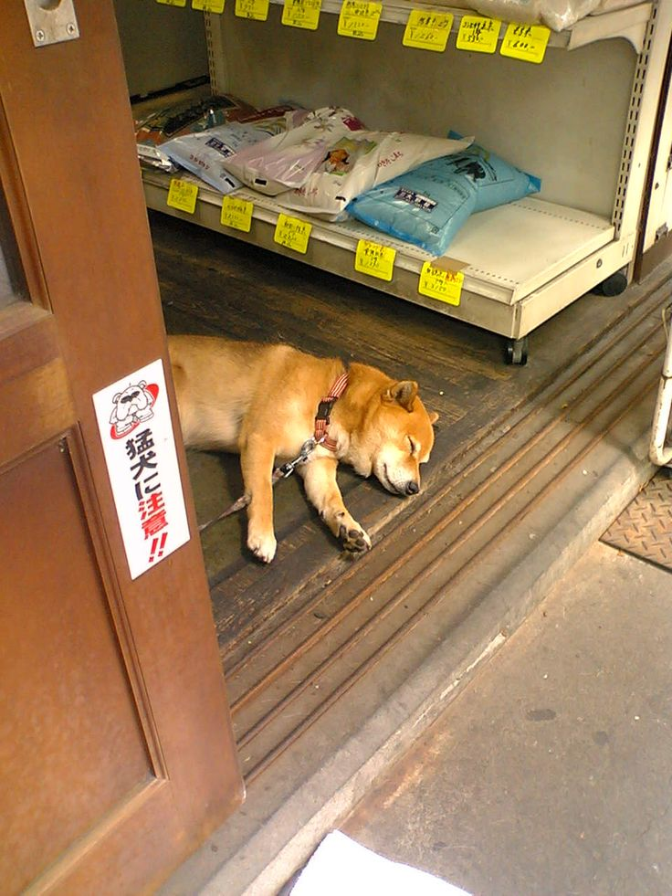 猛犬に注意!!