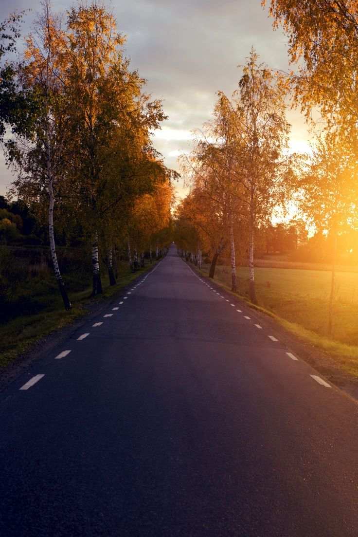 Road to fall...