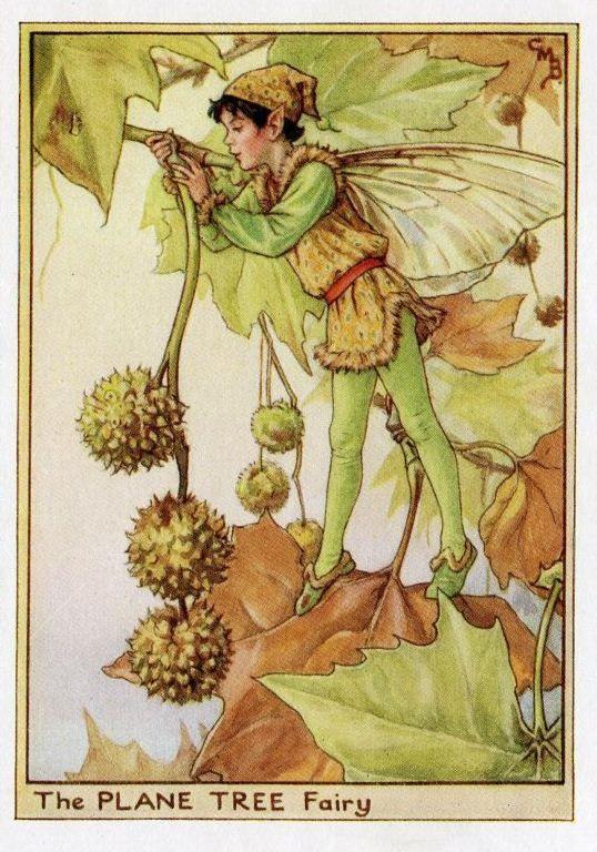 Plataan Flower Fairy Vintage Print, c.1950 Cicely Mary Barker-boekillustratie plaat