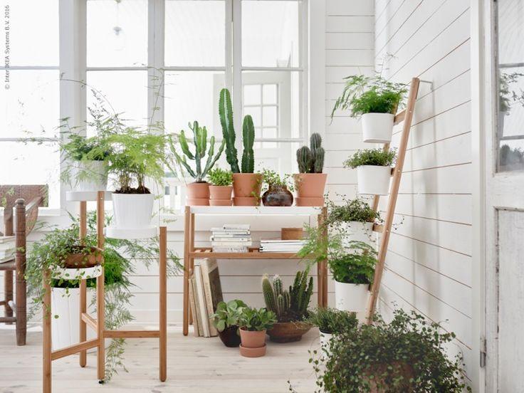 SATSUMAS piedestaler i naturmaterialet bambu är perfekt för dig som vill ha ett mer hållbart och grönare liv hemma! Välj mellan en piedestal i två våningar, en trippelpiedestal eller en planteringsstege med fem krukor.