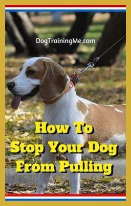 how to start dog walking in your neighborhood