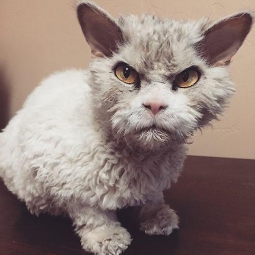 Habe ich doch gesagt: Wolle nicht waschen!