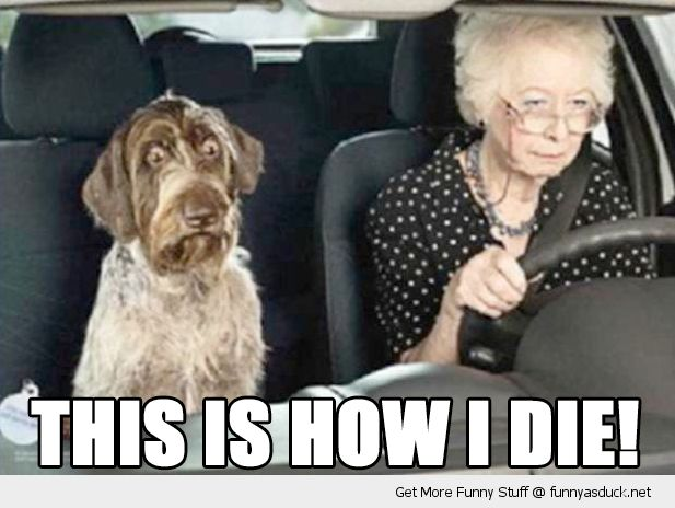 Funny Meme Old Lady : Picture of old lady driving a dog in car scared