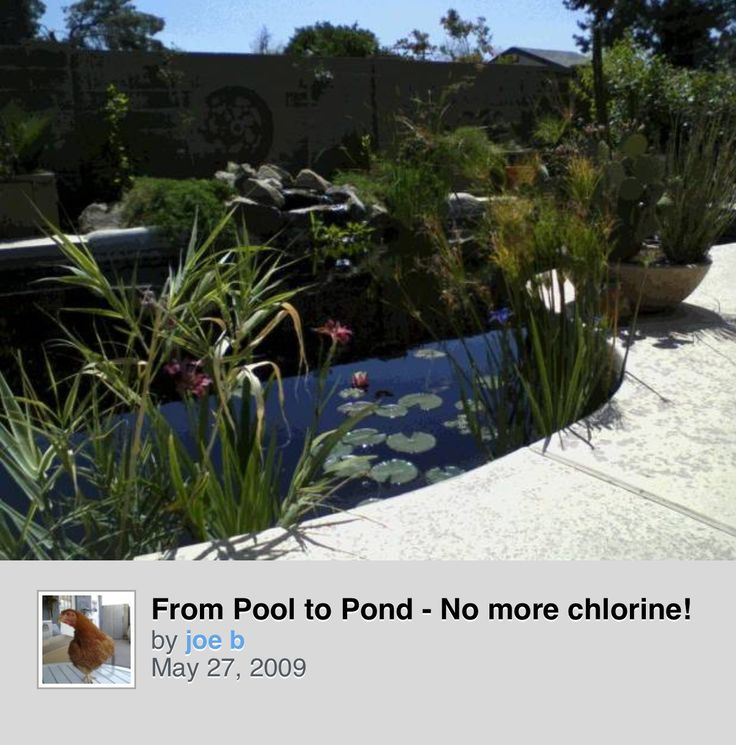 32 best images about pool to pond on pinterest gardens for Koi pond swimming pool conversion
