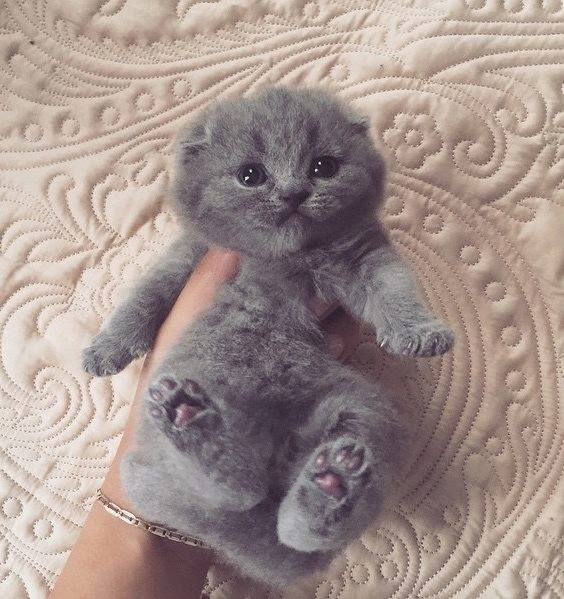 Those little toesies! Cute animals, Kittens cutest, Cute