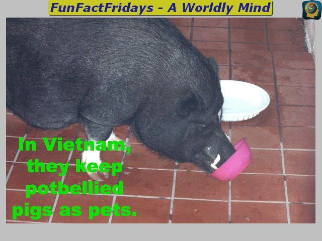 FunFactFridays - #FF - Follow for Daily #Geography #Trivia #sschat