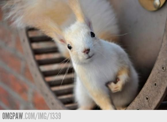 OMGPaw - wit eekhoorns