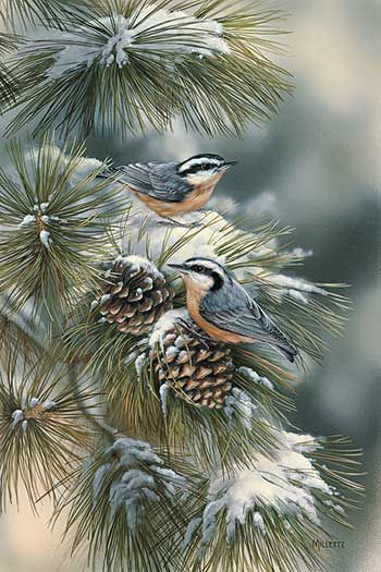 Winter Gems-Nuthatches by Rosemary Millette : Wild Wings