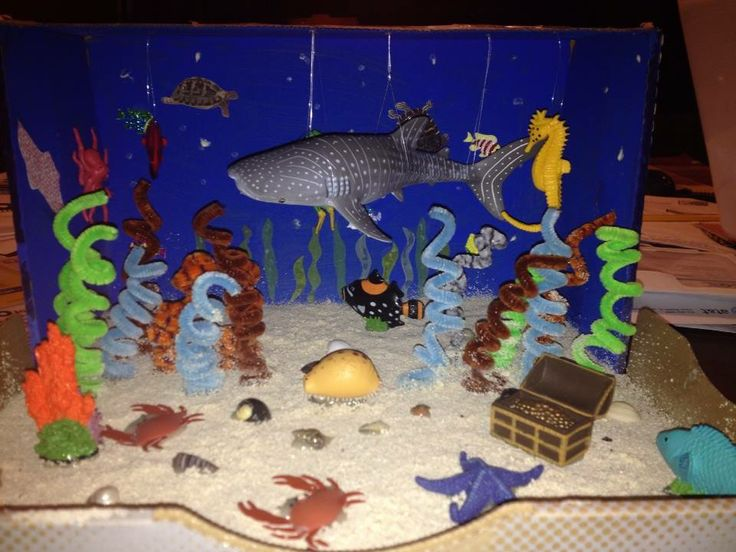 Pictures of Ocean Ecosystem For 3rd Graders - #rock-cafe