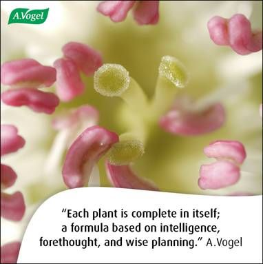 Each plant is complete in itself; a formula based on intelligence, forethought, and wise planning. A.Vogel