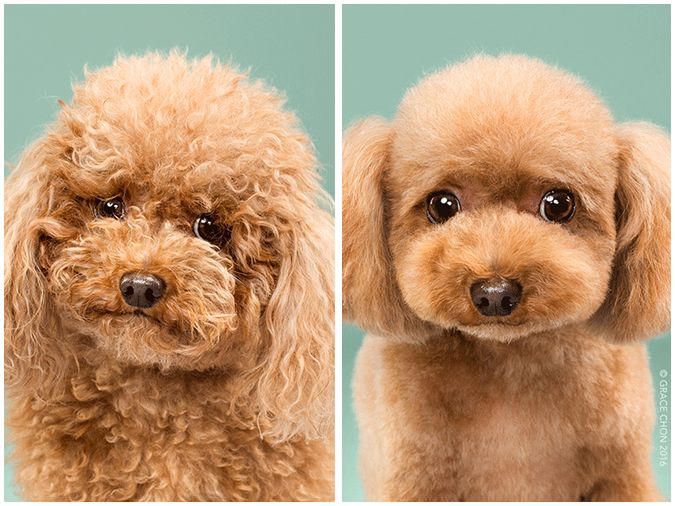 Doggy before-and-afters