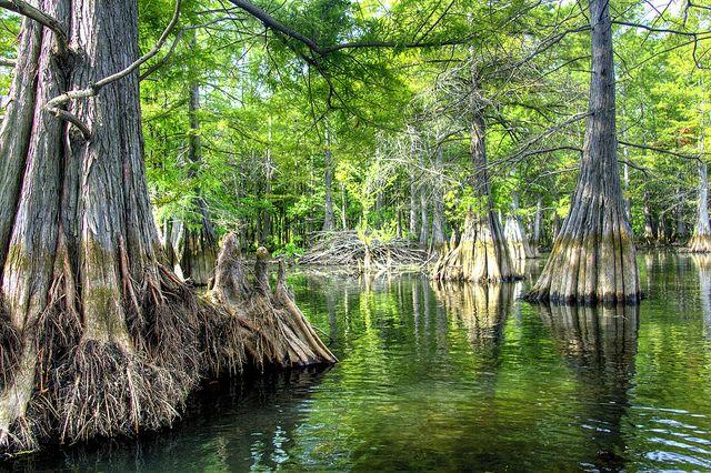 Les bayous de la Louisiane. Par amour pour l'œuvre de James Lee Burke.