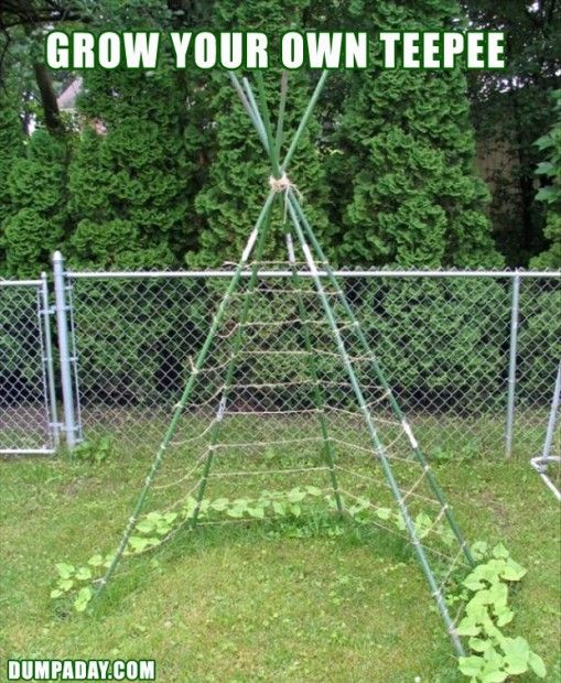Great idea for growing vegetables that climb.