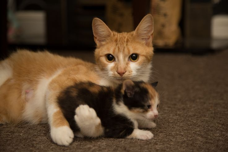 Beautifull cat free stock photo http://ift.tt/2hH0OYj