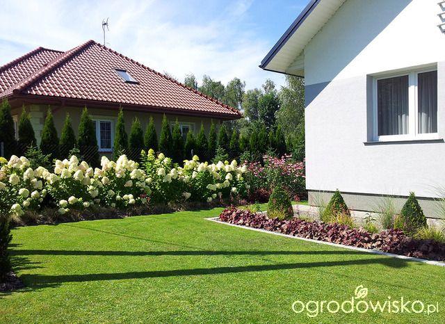 Moja codzienność - ogród Oli - strona 1551 - Forum ogrodnicze - Ogrodowisko