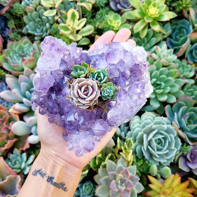 We heart you.  And this succulent in a heart-shaped amethyst.  Ok, we will need this for sure @jenssuccs!