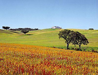 paisagens alentejanas - Pesquisa Google
