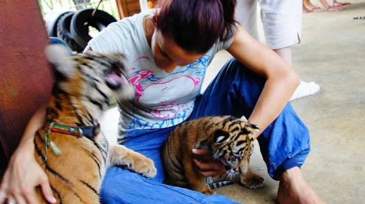 Thailand - tiger tample