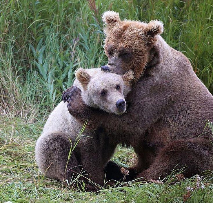 детеныши белого и бурого медведя фото вихрь отбросил сотни