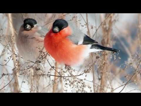 Andrea Bocelli _ Jingle Bells Free Christmas Carol Day eCards | 123 Greetings