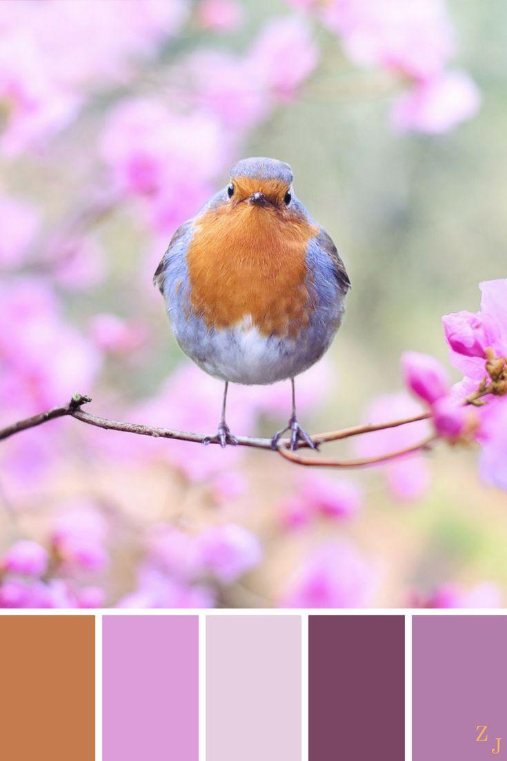 ZJ Colour Palette 23 #colourpalette #colourinspiration