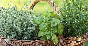 Zioła i przyprawy - produkty - kuchnia