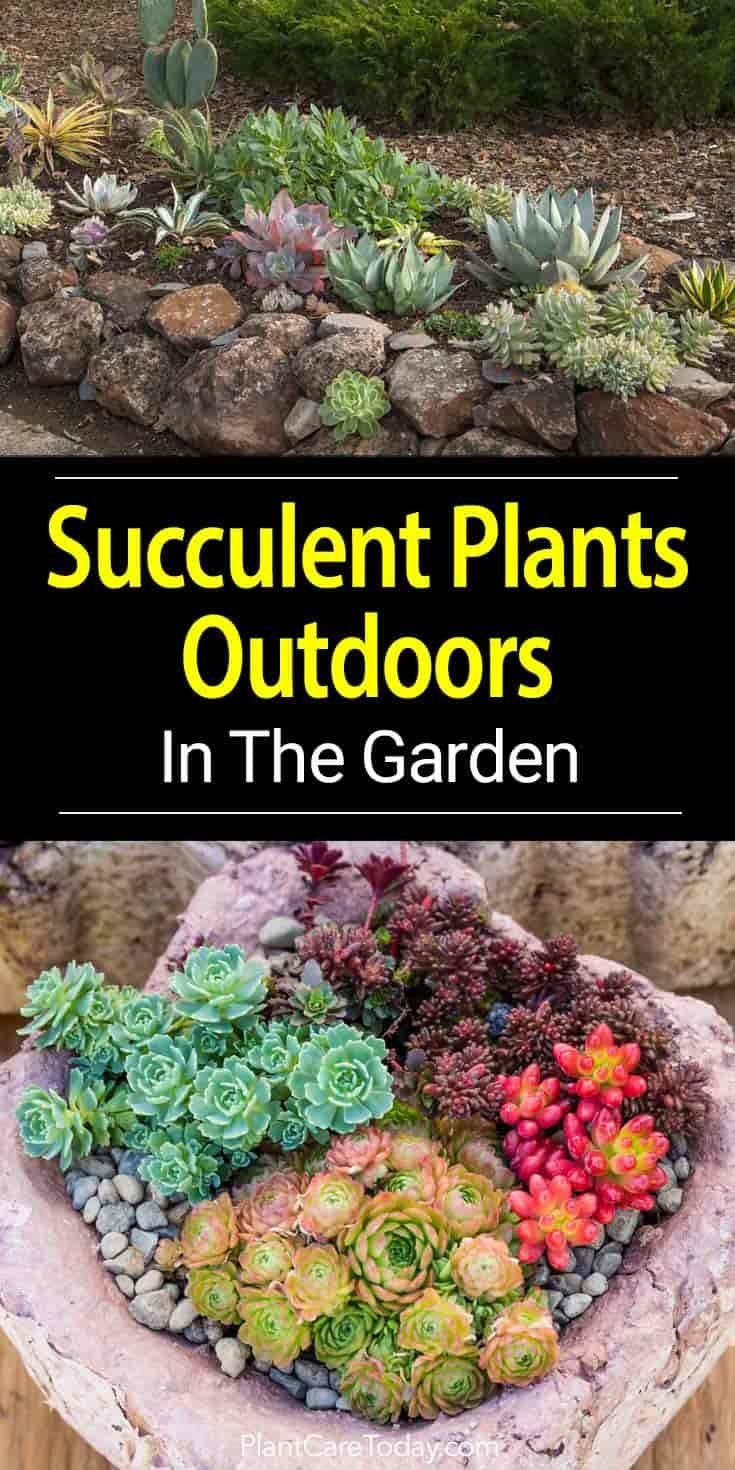 Outdoor Succulents How To Grow Succulent Plants In The Garden