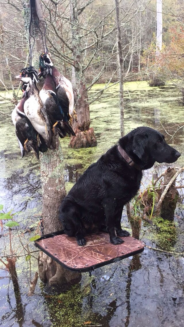 17 Best ideas about Duck Blind on Pinterest   Duck hunting blinds, Goose blind and Duck hunting ...