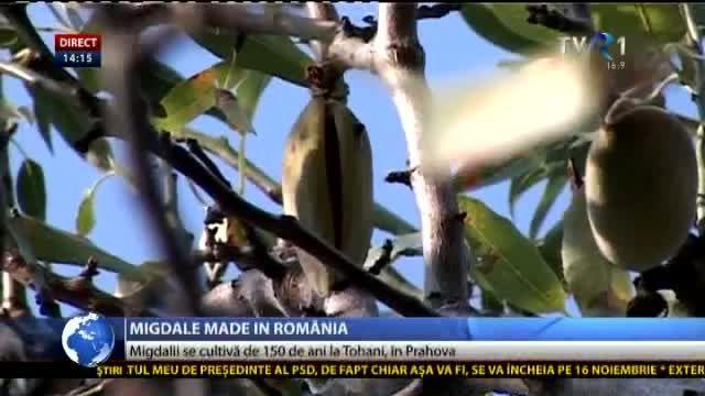 Migdalii se cultivă de 150 de ani în România. Livezi pe o suprafaţă de 7 hectare, la Tohani | Stiriletvr.ro - Site-ul de stiri al TVR