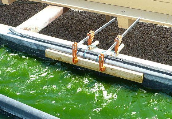 Algae biofuel research papers