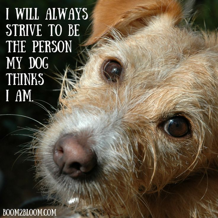Quotes About Dogs #DogQuotes #QuotesAboutDogs #PetQuotes #ANimalQUotes #Animals #Pets #Dogs
